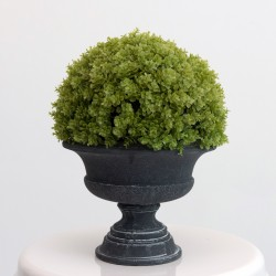 Large Decorative Topiary Ball Plant in Black Vase