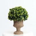 Rent: Medium Decorative Topiary Ball Plant (Light Brown Vase)