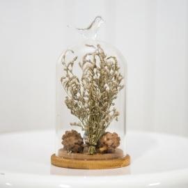 Glass Dome Jar