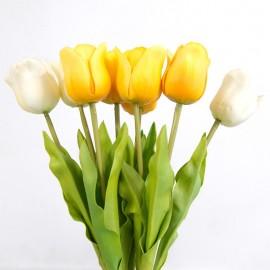 Tulip Stalk