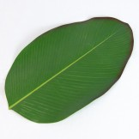 Rent: Large Banana Leaf (Washable, Artificial)