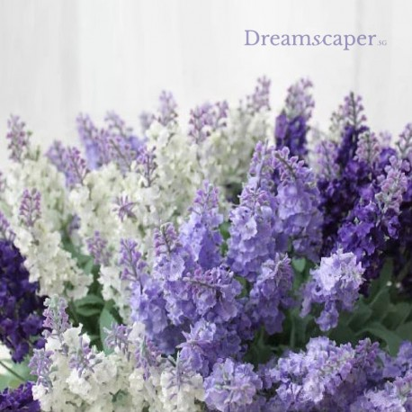Purple Flowers Clary Sage Lavender
