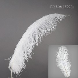 Large White Ostrich Feathers